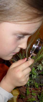 Lilia beobachtet Wollläuse (Pseudococcidae) auf Zimmerpflanzen