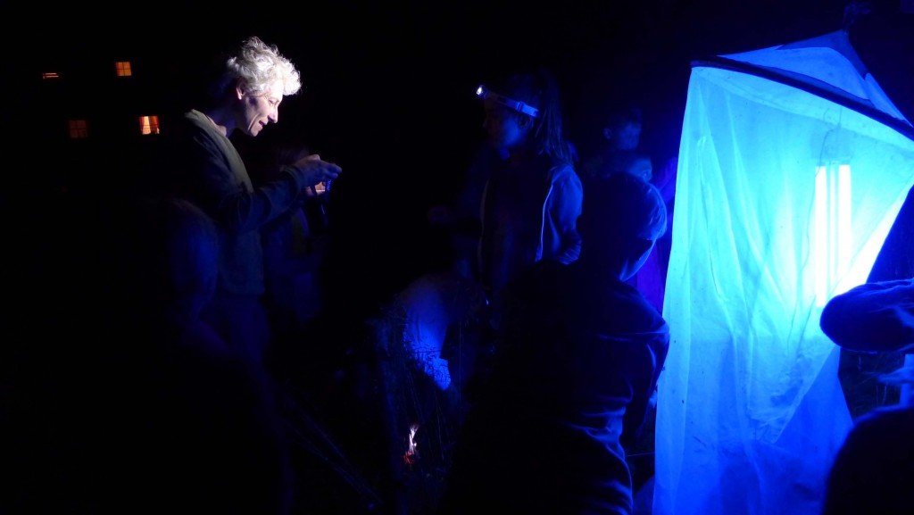 Dr. Fertschai beim Bestimmen einiger Nachtfalter ...