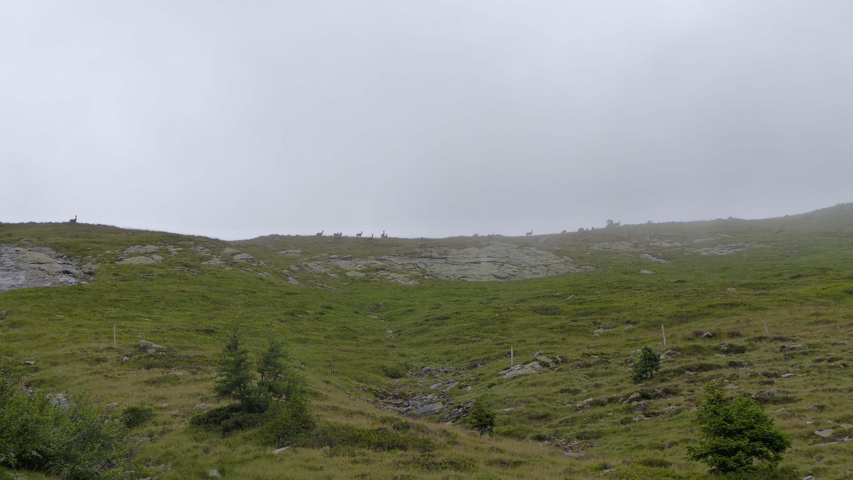 Die Silhouetten der Gämsen entlang des Bergrückens ...