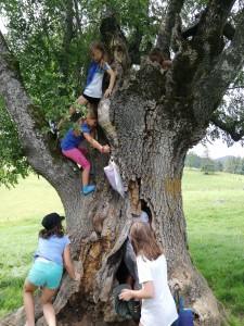 Ein faszinierender Baum ... AUSSEN ...